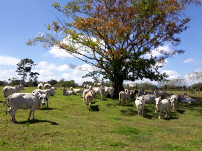 Farm for sale in Monterrey de San Carlos Costa Rica