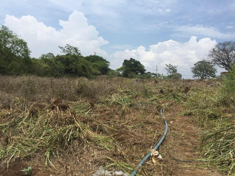 Development opportunity Finca in El Coyol