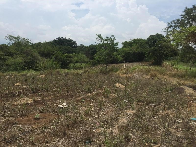 Development opportunity Finca in El Coyol