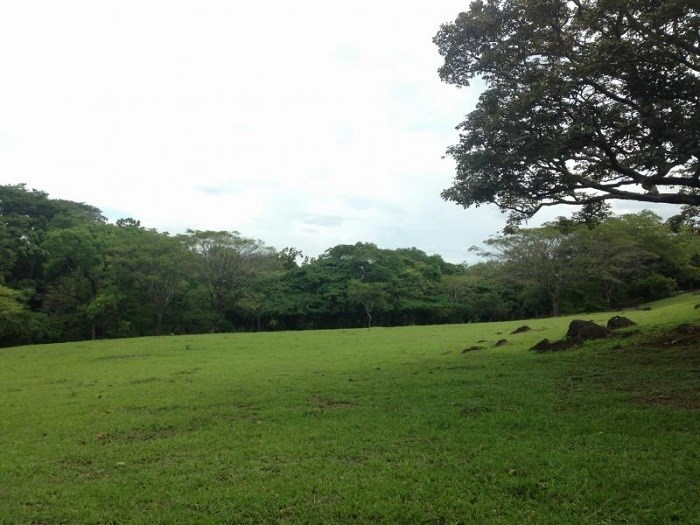 Land for Sale. High Density Land for Development of Condominium in La Guacima de Alajuela. J