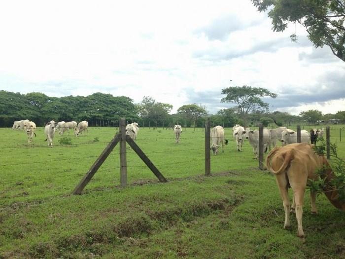 Land for Sale. High Density Land for Development of Condominium in La Guacima de Alajuela. J