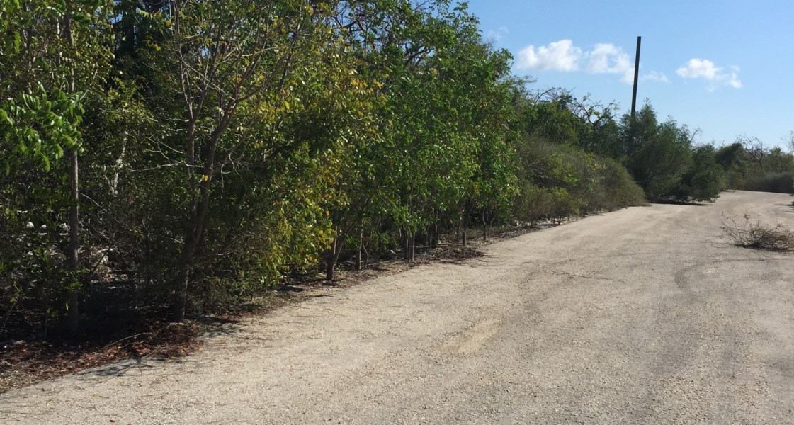 RE/MAX real estate, Cayman Islands, Little Cayman West, Freehold - High and dry, nice s