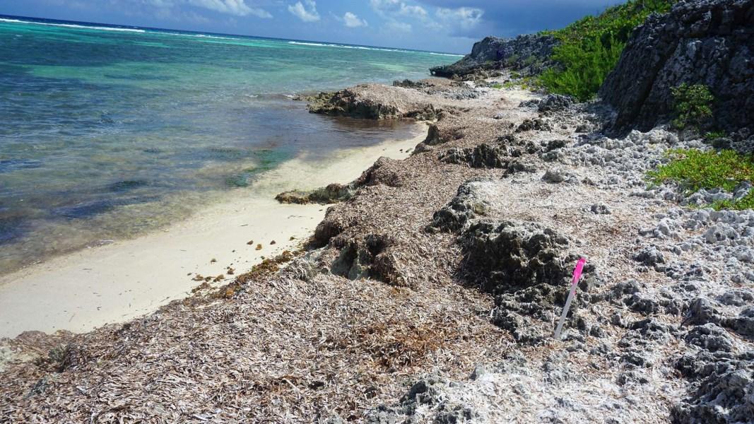 RE/MAX real estate, Cayman Islands, North East Coast, Northeast Coast Beachfront Lot