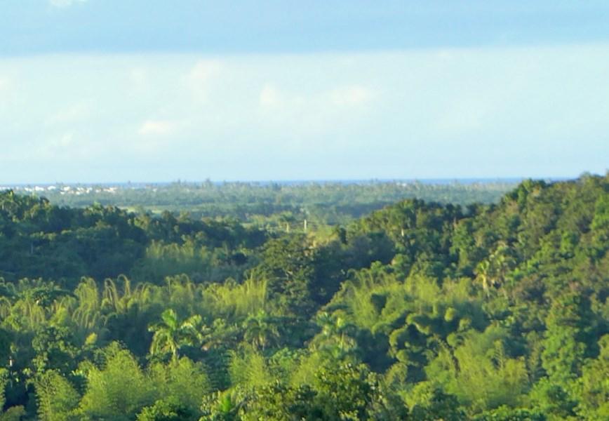 RE/MAX real estate, Puerto Rico, Rio Grande, Terreno en Bo. Jimenez, Rio Grande