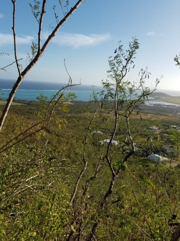 RE/MAX real estate, US Virgin Islands, Mount Washington and Washington Hill Estate, New Listing  LotsAcres St Croix  Union  Mt. Washington EA