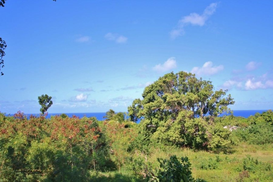 RE/MAX real estate, US Virgin Islands, La Vallee, New Listing  LotsAcres St Croix  La Vallee NB