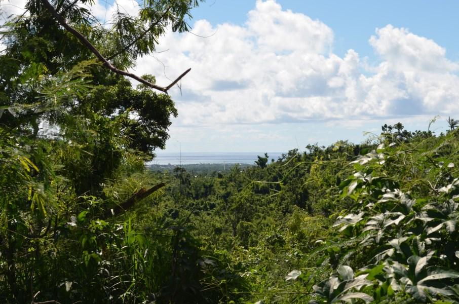 RE/MAX real estate, US Virgin Islands, River Estate, Price Reduced  LotsAcres St Croix  River PR