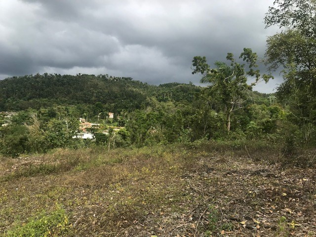RE/MAX real estate, Puerto Rico, Ciales, Bo. Hato Viejo-Ciales