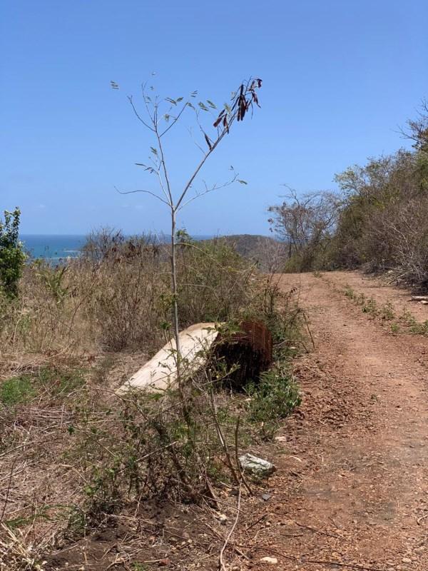 RE/MAX real estate, Grenada, Woburn, Woburn Lot 10480