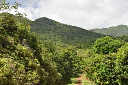 RE/MAX real estate, Grenada, Mardigras, Organic Agriculture Concern..