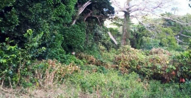RE/MAX real estate, Grenada, Carriere, Beautifully Lot with Panoramic Views for Sale..