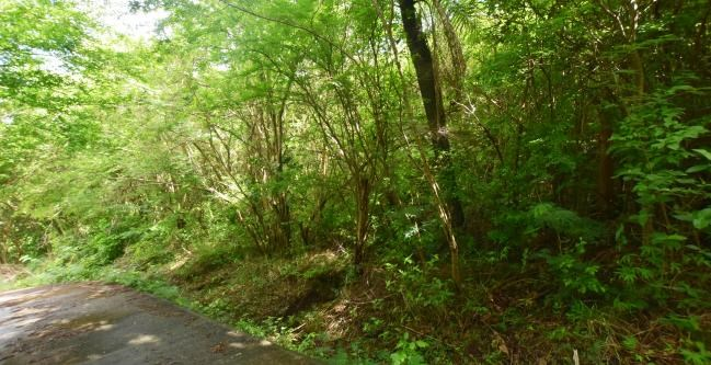 RE/MAX real estate, Grenada, Grand Anse, Manageable breezy lot located at Karland Park, St George's