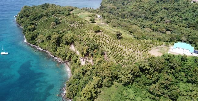 RE/MAX real estate, Grenada, Gouyave, Amazing agricultural site situated at Black Bay Estate, St George's.