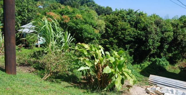 RE/MAX real estate, Grenada, Vineyard, This tucked away lot, measuring approximately 16,335 sq ft, is located at the Vineyard, Windsor Forest, St David.