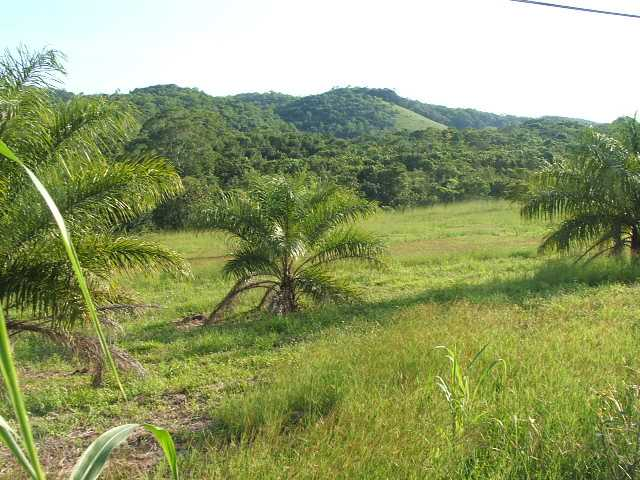 RE/MAX real estate, Belize, Unitedville, # 2033 – 118 ACRES LAND – Floral Park, Cayo, Belize