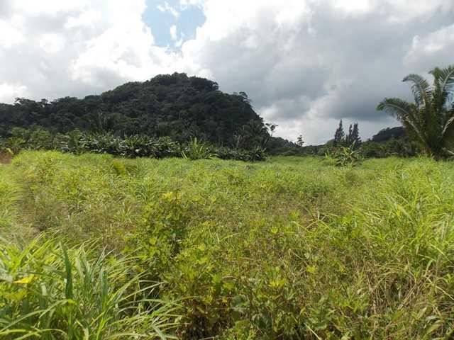 RE/MAX real estate, Belize, Belmopan, # 2051 - 16 ACRE FARM - NEAR BELMOPAN CITY, CAYO DISTRICT