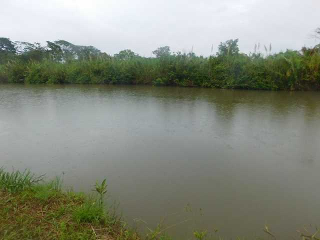 Remax real estate, Belize, Mullins River, #2077 - 70 ACRES + RIVER - STANN CREEK DISTRICT, BELIZE.
