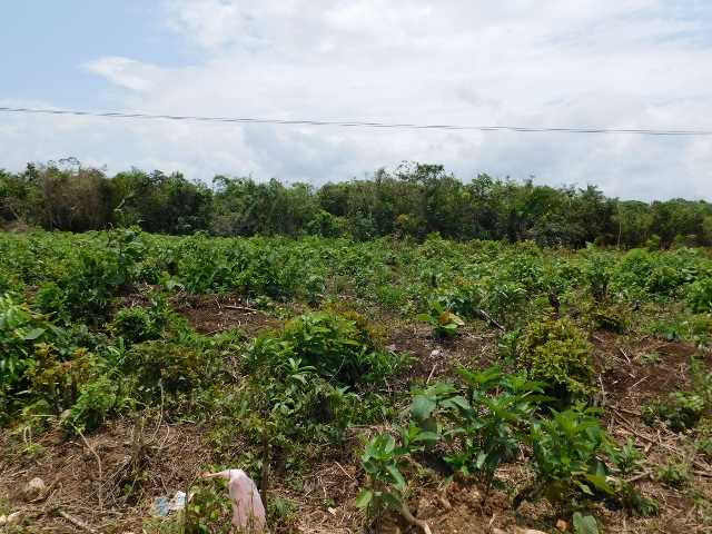 Remax real estate, Belize, Belmopan, # 2071 - 2.3 ACRES OF LAND - BELMOPAN CITY, CAYO DISTRICT