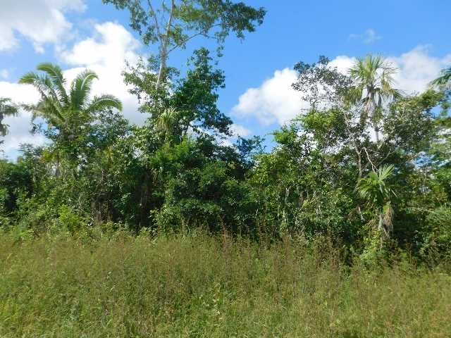 Remax real estate, Belize, Valley of Peace, # 2070 - 36 ACRES OF LAND - near BELMOPAN CITY, CAYO
