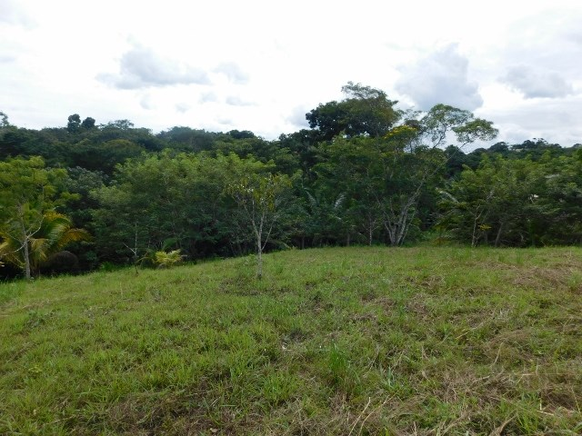 Remax real estate, Belize, San Ignacio, # 2162  - FOUR LARGE, ADJACENT LOTS - SAN IGNACIO, CAYO DISTRICT