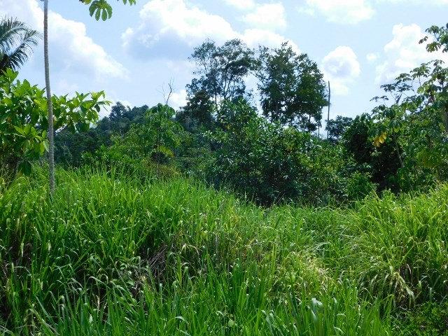 Remax real estate, Belize, Belmopan, # 2205 - 30 ACRES OF LAND - near BELMOPAN, CAYO DISTRICT