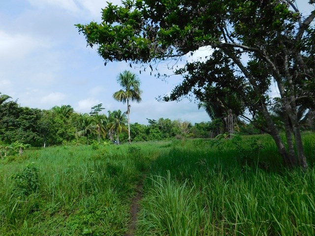 Remax real estate, Belize, San Ignacio, # 2228 - 18.27 ACRES + SPRING + POND - near SAN IGNACIO, CAYO DISTRICT