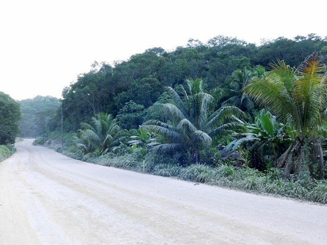Remax real estate, Belize, Belmopan, #2245 -  17 ACRES OF LAND LOCATED CLOSE TO BELMOPAN, CAYO DISTRICT.