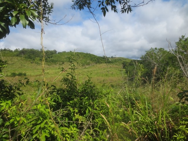 Remax real estate, Belize, San Ignacio, #2263 - 101 ACRES OF LAND NEAR VALLEY OF PEACE VILLAGE, CAYO DISTRICT, BELIZE