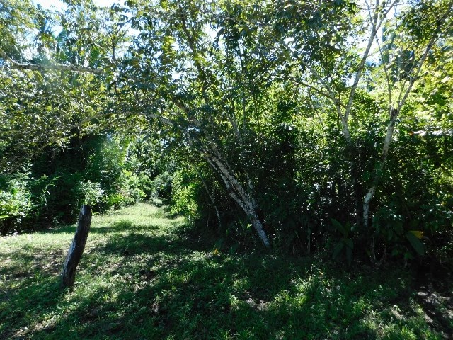 Remax real estate, Belize, San Ignacio, #2273 - 10.5 ACRES OF LAND NEAR SAN IGNACIO, CAYO DISTRICT, BELIZE