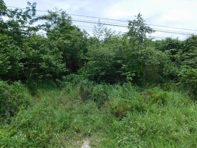 RE/MAX real estate, Belize, Camelote, 10.5 ACRES OF LAND WITH HIGHWAY FRONTAGE NEAR BELMOPAN, CAYO, BELIZE.