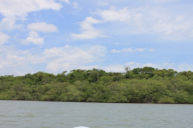 Remax real estate, Belize, Cattle Landing, #7018 - 7.84 Acres of Waterfront Property - Toledo, Belize