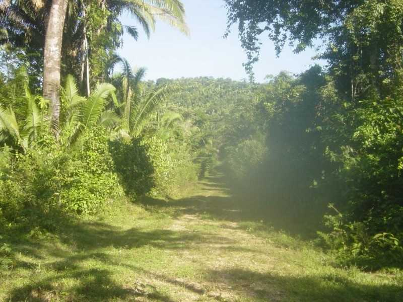 Remax real estate, Belize, Big Fall, #7011 - Parcels of Land located beside Machaca Hill in Toledo