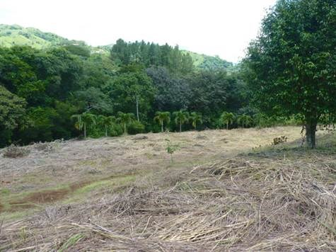 Remax real estate, Costa Rica, Atenas, Lot bordered by a stream and large mature trees.