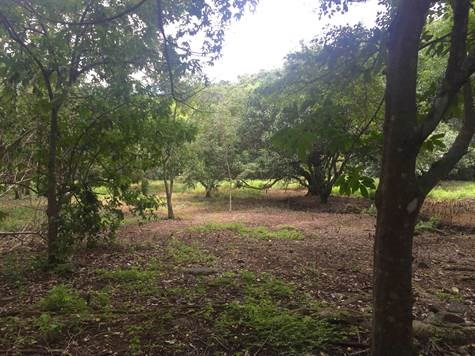 Remax real estate, Costa Rica, Atenas, More than 2 hectares of land