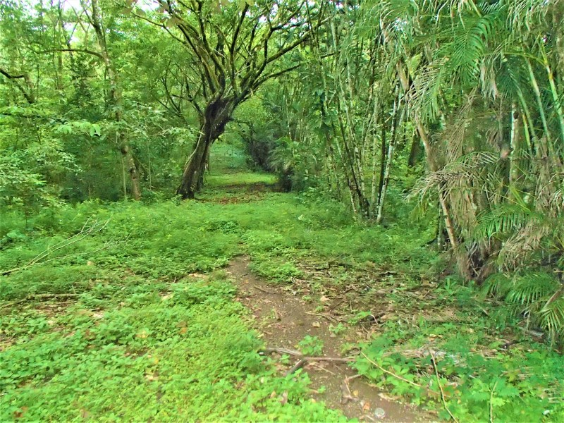 Remax real estate, Costa Rica, Jesus Maria, property  with  multiple development