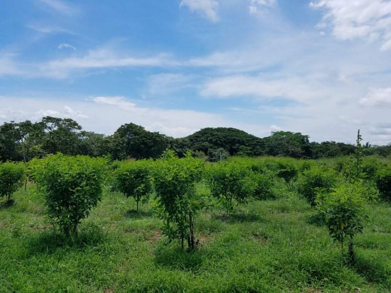 Remax real estate, Costa Rica, Orotina-Hacienda Vieja, Farm 50699 meter/ Orotina