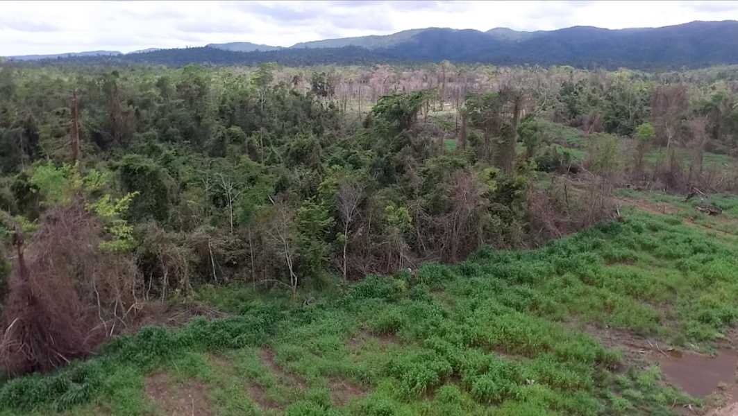 Remax real estate, Belize, Belmopan, 100 Acre Parcels of Jungle in the Manatee Agricultural Area