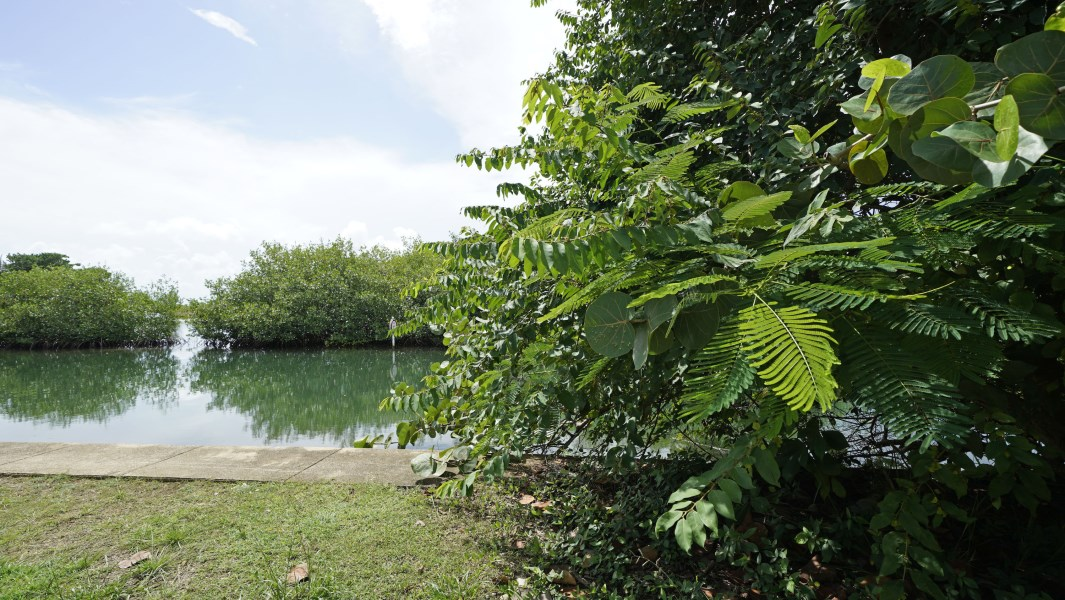 Remax real estate, Belize, Placentia Village, 1.4 Acres Sea to Lagoon in the Village