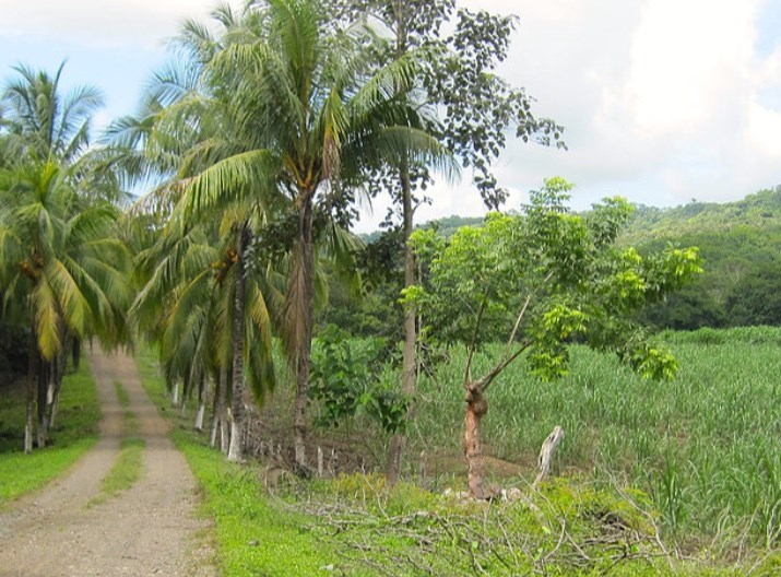 Remax real estate, Costa Rica, Puntarenas, The Blessed Land