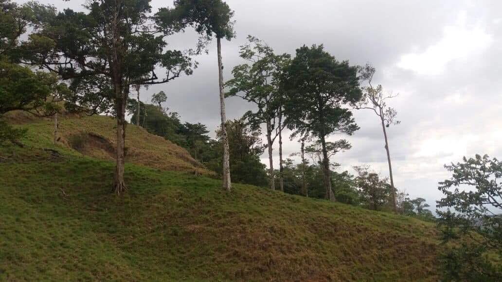 Remax real estate, Costa Rica, Zarcero, Finca apta para ganadería y agricultura en Zarcero!!!