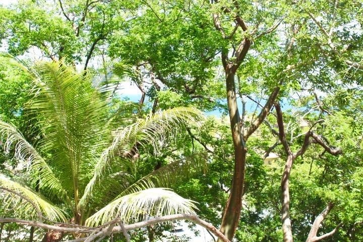 Remax real estate, Honduras, Roatan, Home Site 125Parrot Tree Bargain