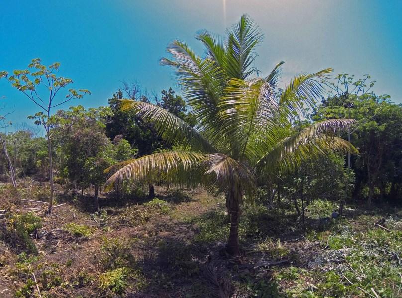 Remax real estate, Honduras, Utila, Nestled into Utilas greeneryCleared home site ready