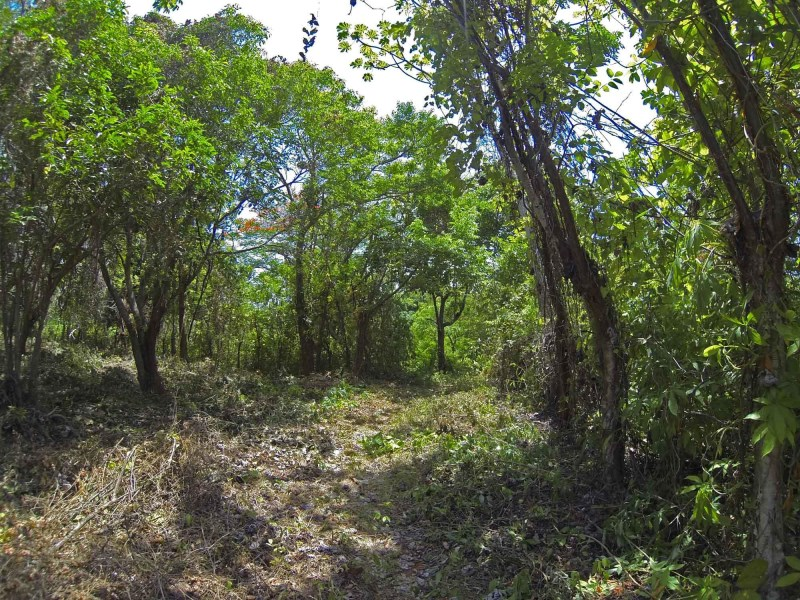 Remax real estate, Honduras, Utila, Swanix buildready home siteNatural canopy covered lot