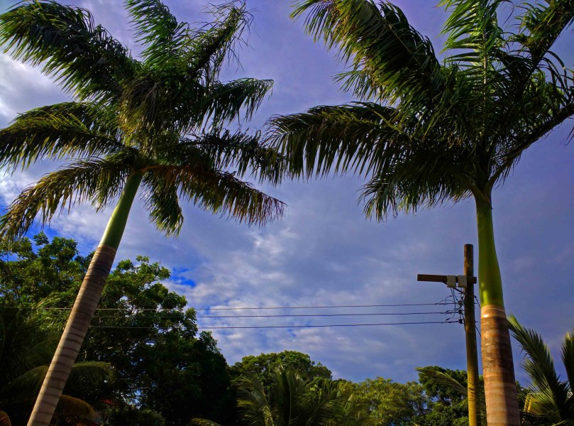 Remax real estate, Honduras, Utila, Higher ground off the main rd.Bargain Home Site Lot A