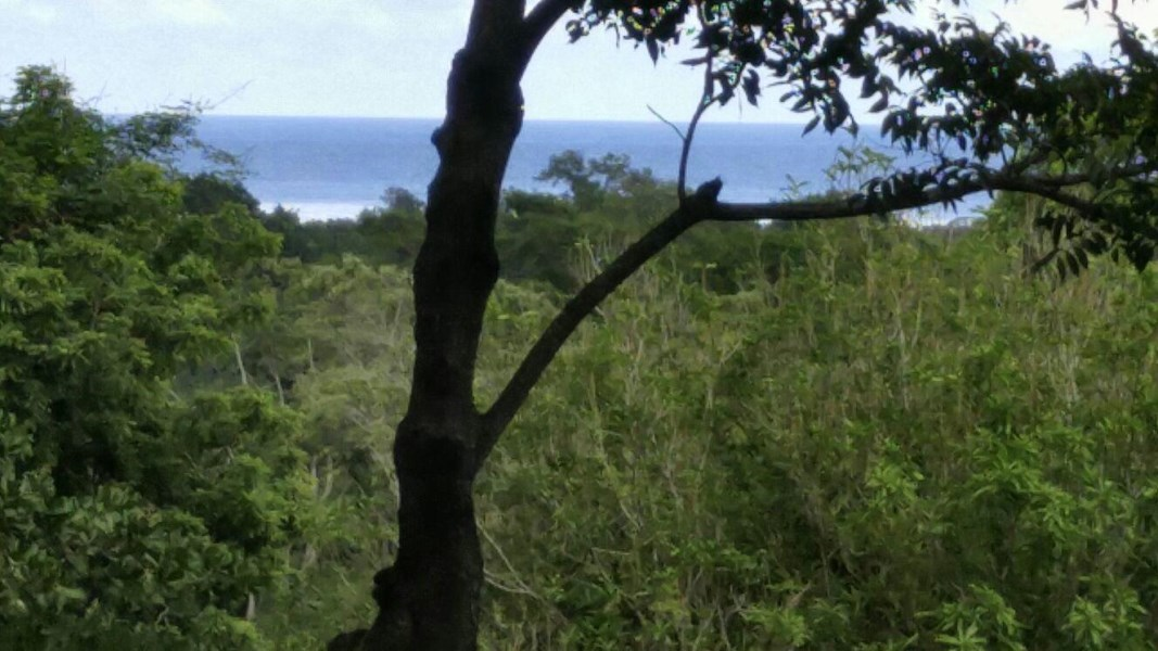 Remax real estate, Honduras, Roatan, HOTTEST SPARROWBEAUTIFUL VACANT LOT 2 ACRES