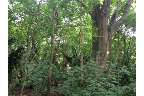 Remax real estate, Costa Rica, Nosara, Prime Building Lot in K Section for Under $100k - SOLD