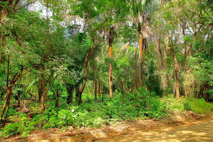 Remax real estate, Costa Rica, Nosara, Large Parcel Close to the Beach in K Section-SOLD