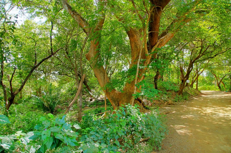 Remax real estate, Costa Rica, Nosara, Rare 100% Buildable Double Lot in Playa Pelada – Short Walk to the Beach, Restaurants, and Shops