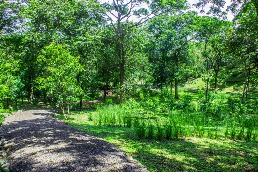 Remax real estate, Costa Rica, Nosara, 1.2 Acres of Aloha, 5 min Drive to Guiones Surf, Backs into Protected Jungle, Rare Find - UNDER CONTRACT