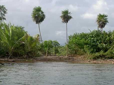 Remax real estate, Belize, Sittee River, L3657 - Caribbean Beach Lot for Sale